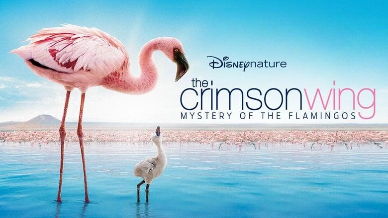 The Crimson of the Flamingos (2008)